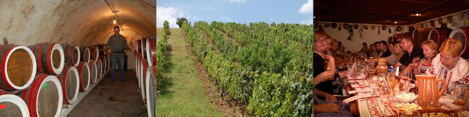 Дегустация вин в винных подвалах Карла Шоша