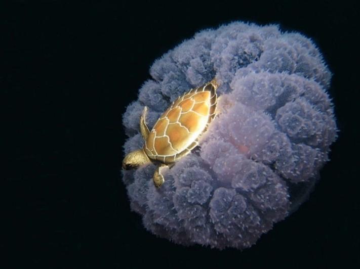 новость 20 черепаха