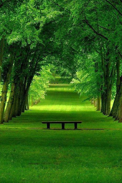новсть пейзажи Весенняя аллея, Chamrande, Франция