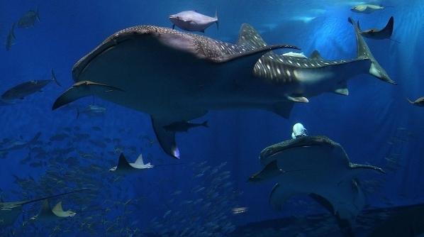 новость 20 фото аквариум Окинава