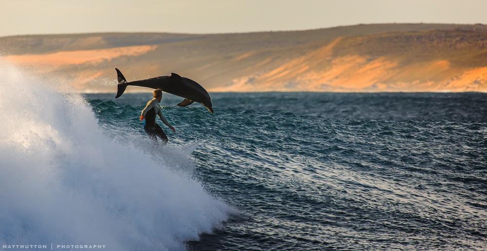 Серфингист и дельфин.