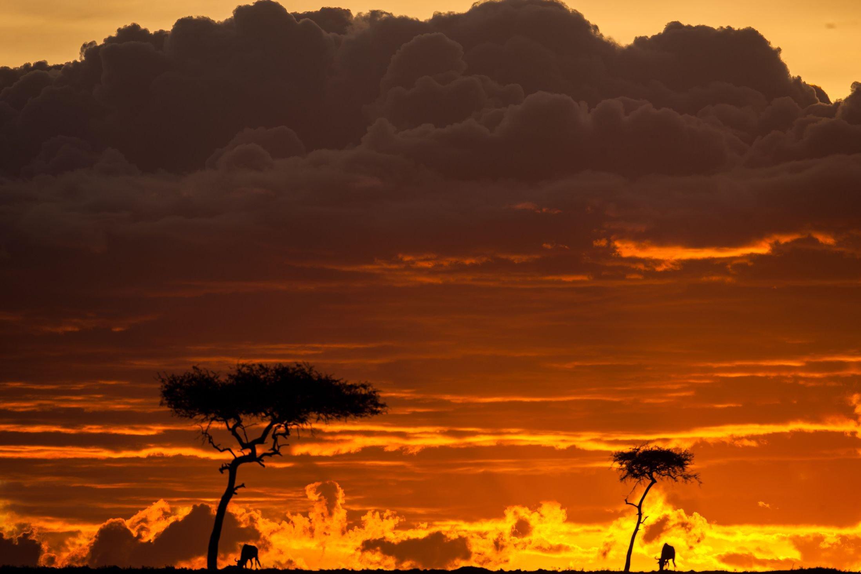 zakaty.-Keniya.-Zapovednik-Masai-Mara.-foto-2
