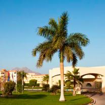 Sol Taba Red Sea Resort (Ex-Sonesta Taba) 5*